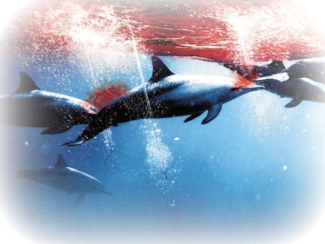 matanza-delfines