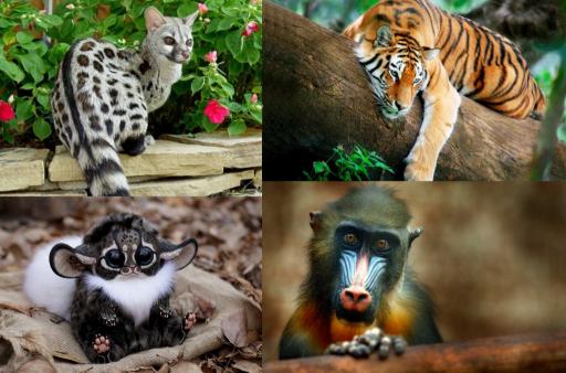 Animales Éxoticos
