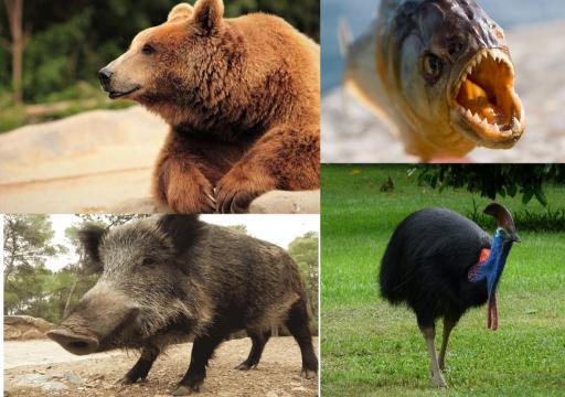 Animales Omnívoros