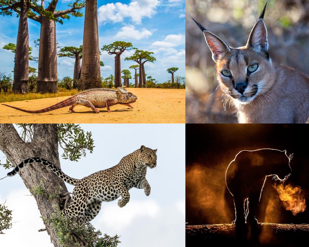 Animales de África nombres