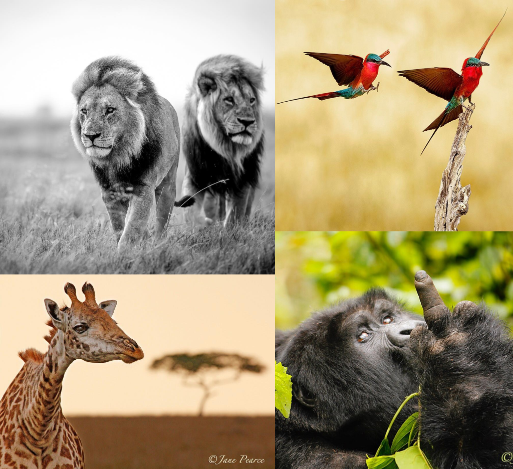 Animales de África salvajes