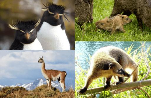 Animales de Argentina