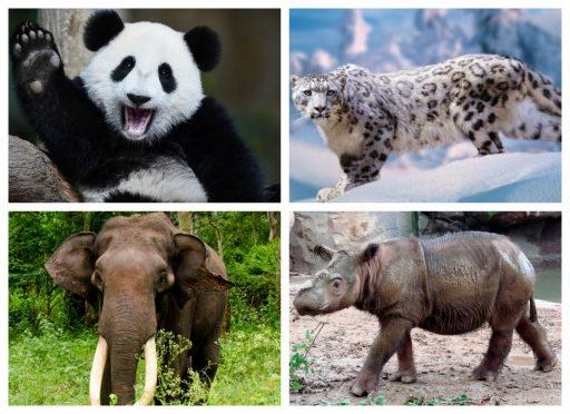 Animales de Asia en riesgo de extinción