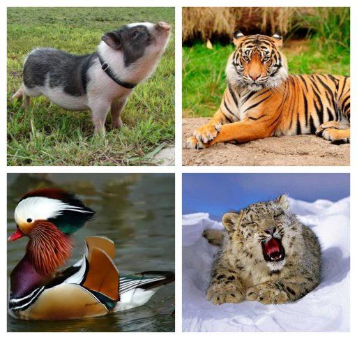 Animales de Asia más representativos
