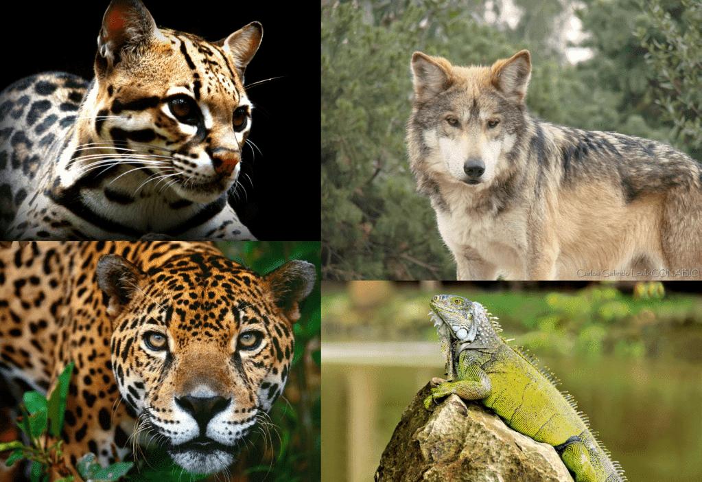 Animales de México
