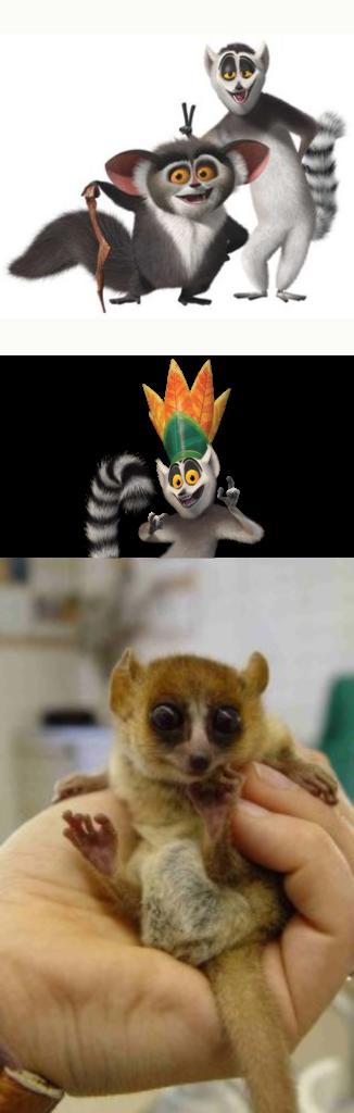 Animales de Madagascar