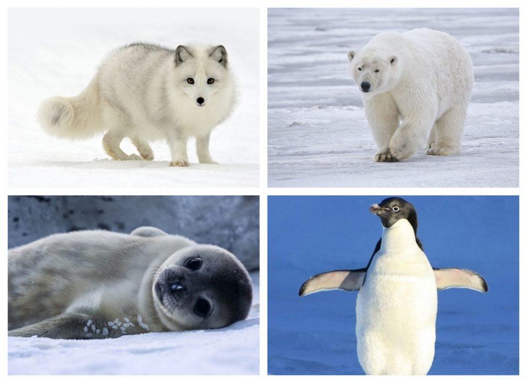 Animales de desiertos polares
