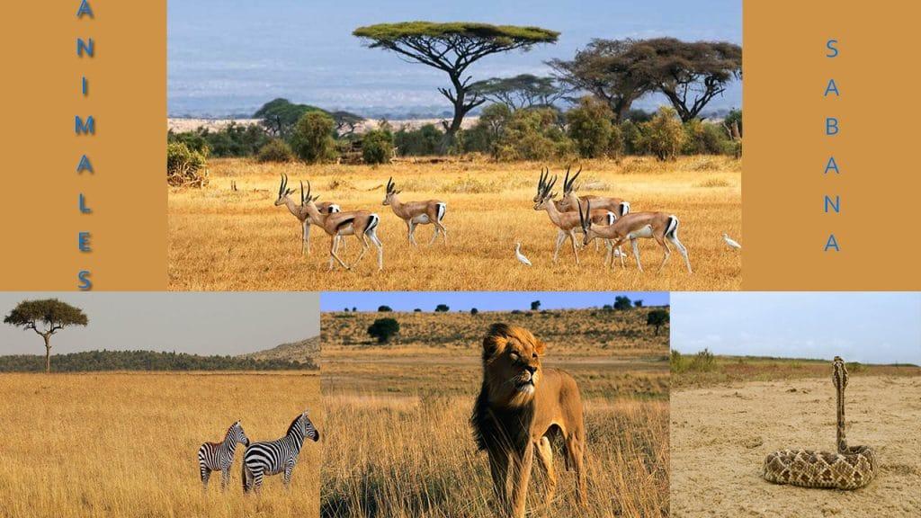 Animales de la sabana africana
