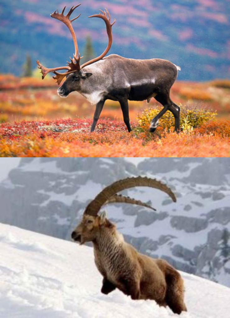 Animales de la tundra