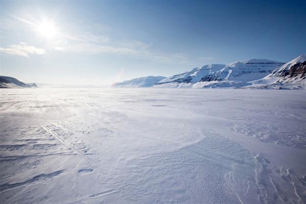 Animales del Ártico (Polo Norte)