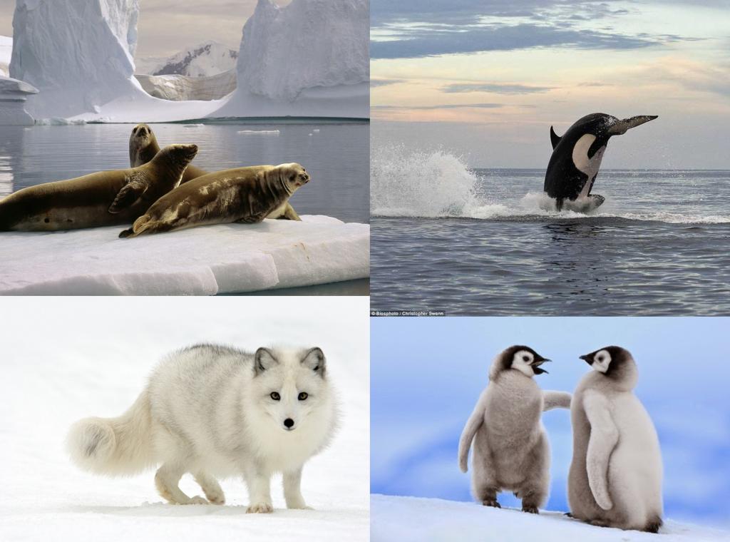 Animales del Antártico Polo Sur