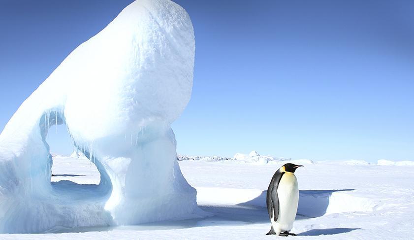 Animales del Antártico (Polo Sur)