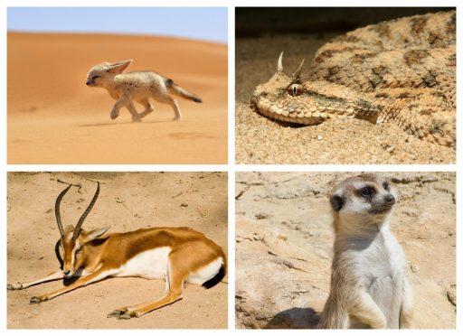Animales del desierto de arena