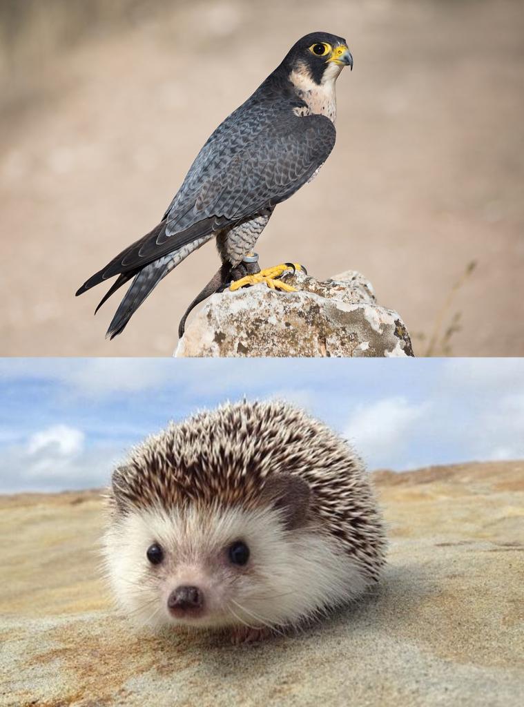 Animales del desierto para niños