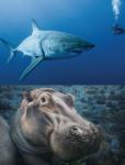 Animales marinas en peligro de extinción