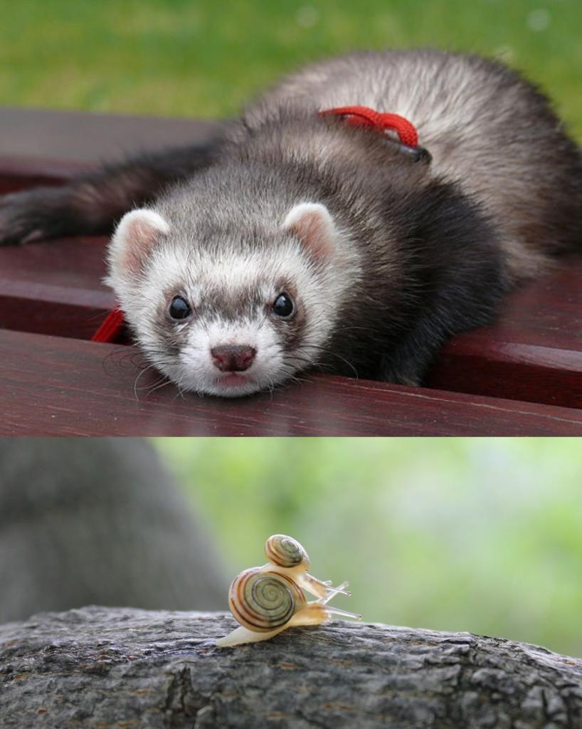 Animales para criar en casa