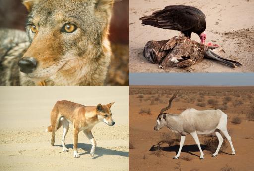 Animales que habitan en el desierto