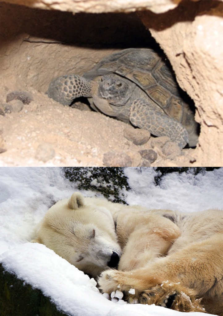Animales que hibernan