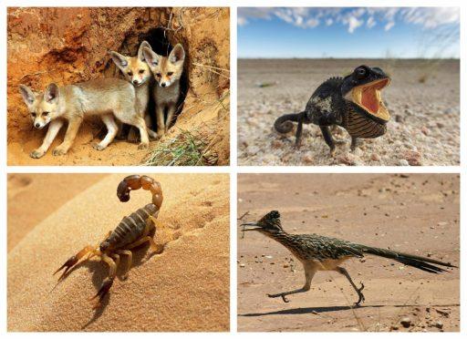 Animales que viven en el desierto mamíferos, reptiles, artrópodos y aves