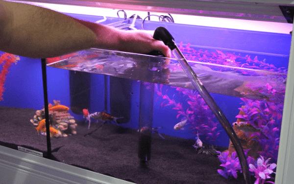 Cómo limpiar una pecera | Animalesis