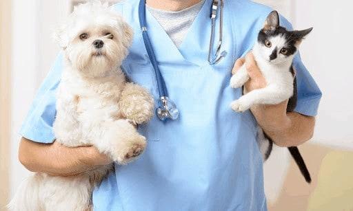 Cada cuánto debo llevar a mi mascota al veterinario