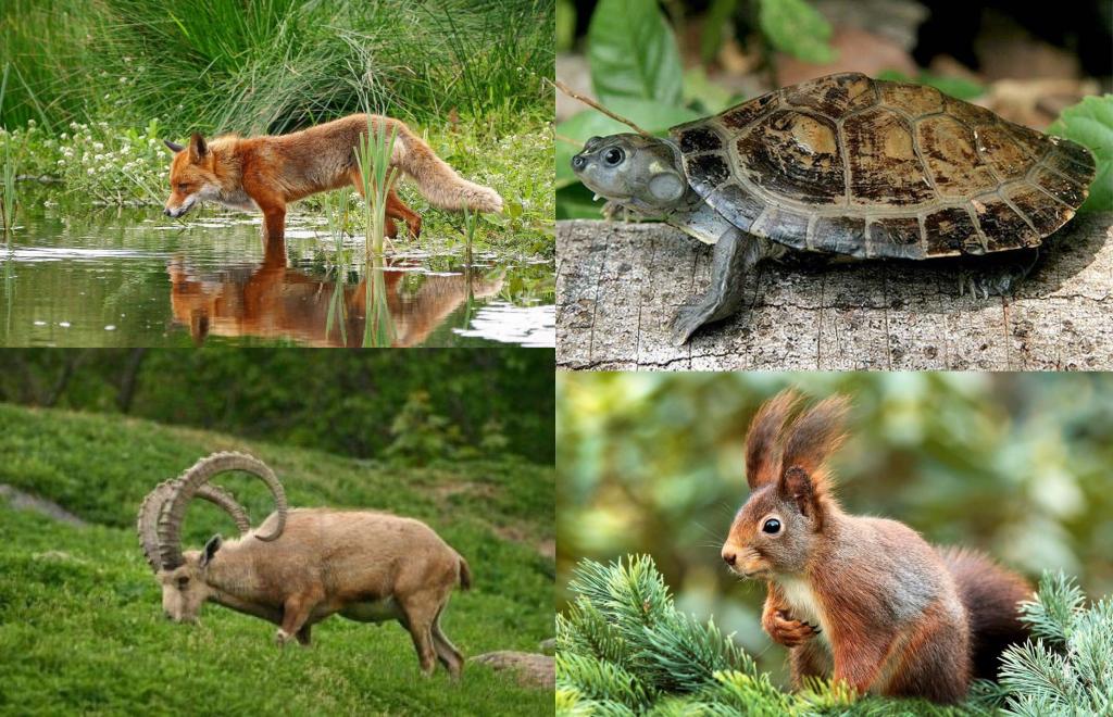 Clasificación de los animales omnívoros