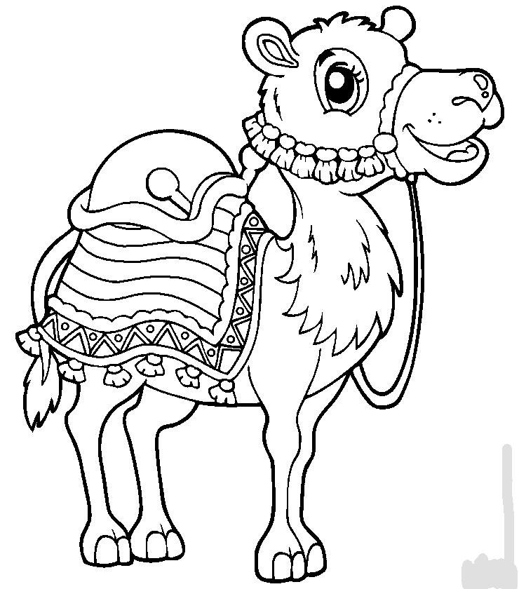 Colorear Dromedario
