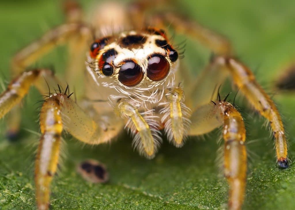 Arañas | Animalesis