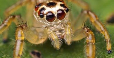 Conoce todo sobre la araña