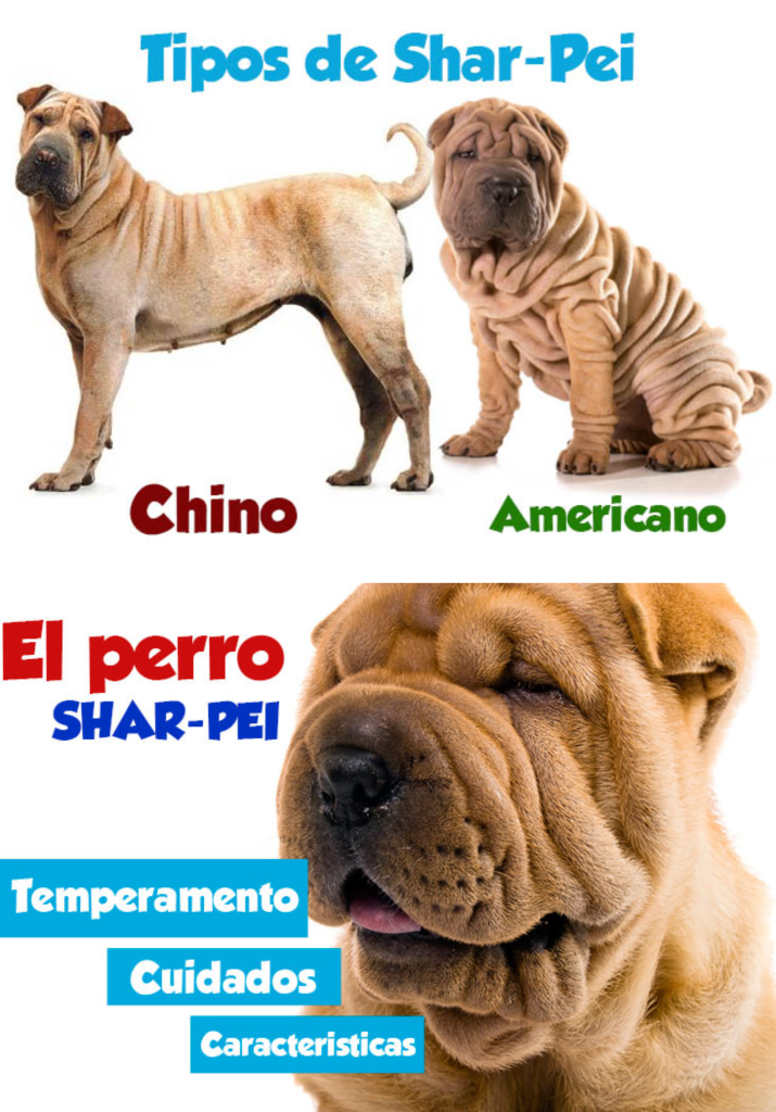 Diferencias entre Shar Pei chino y americano
