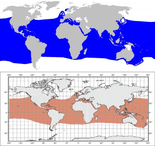Distribución del tiburón Mako