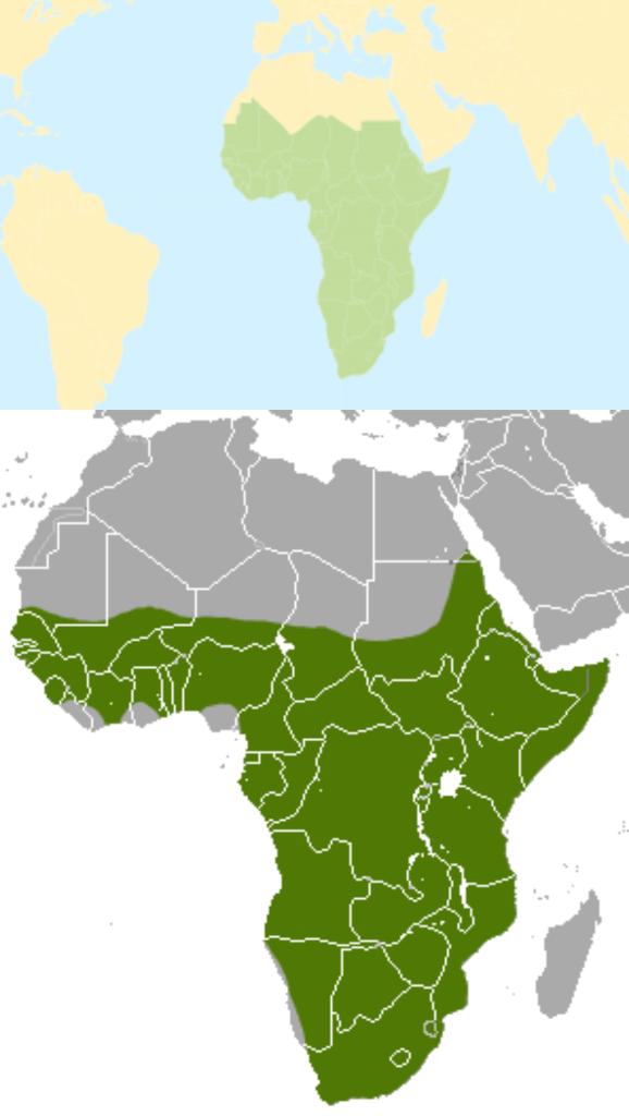 Distribución y hábitat del cerdo hormiguero