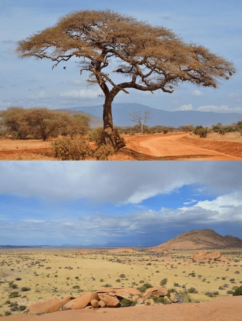 Ecosistema y Bioma de la sabana