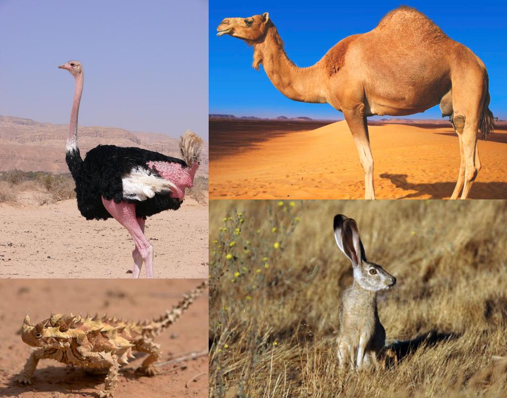 El desierto y los animales
