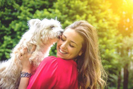 El lengüetazo de los perros y todos sus secretos