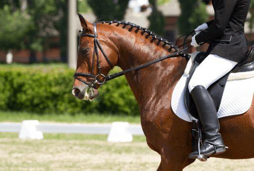 Equipación básica para montar a caballo