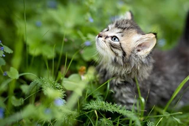Estímulos olfativos para gatos