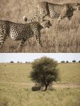 Fauna de la sabana