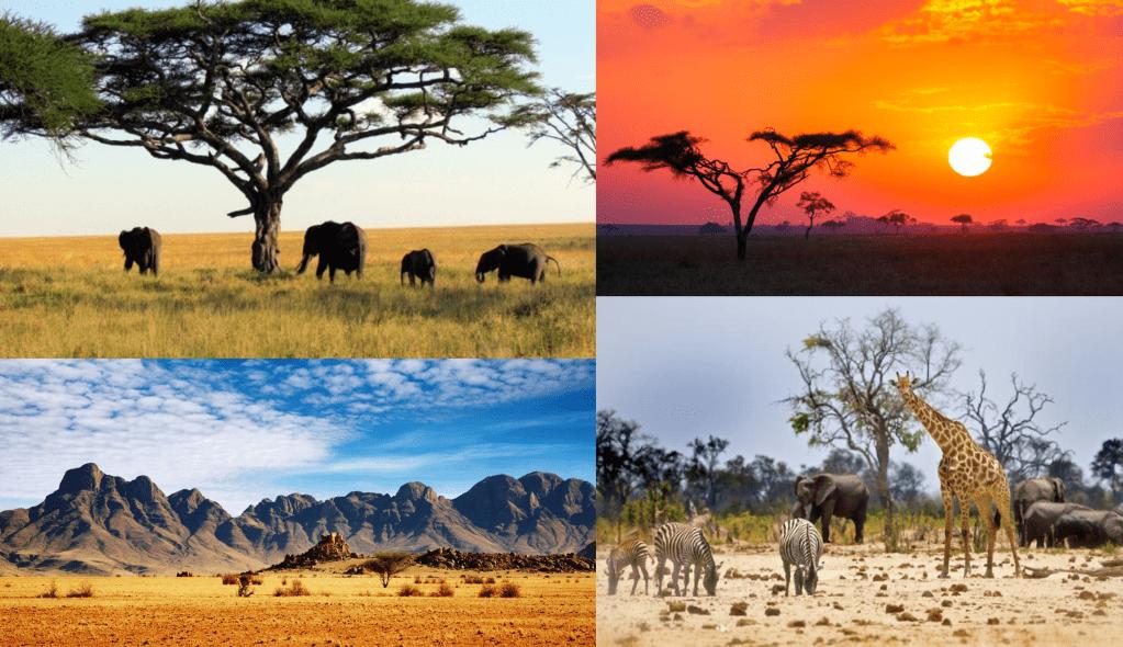 Fotos de la sabana africana