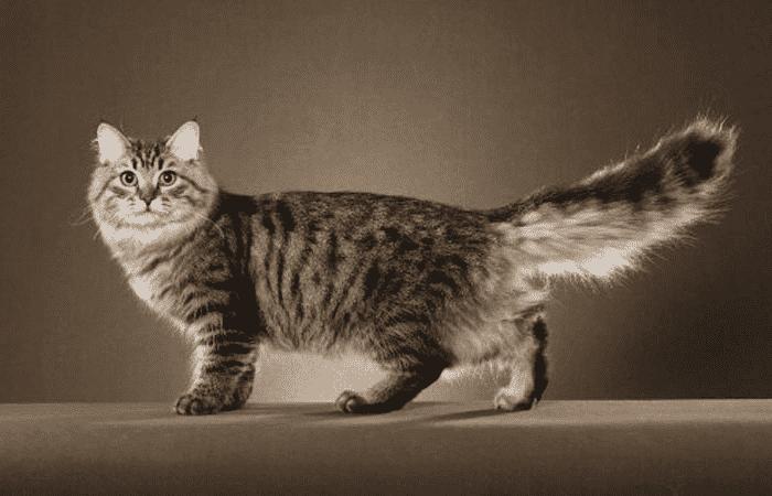 Gatos con rayas de color