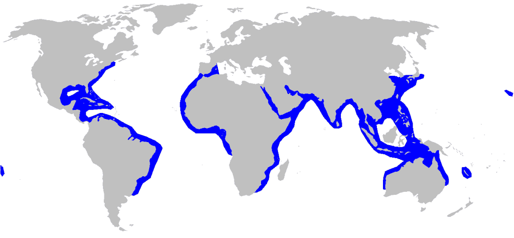 Hábitat mapa de distribucción tiburón martillo festoneado