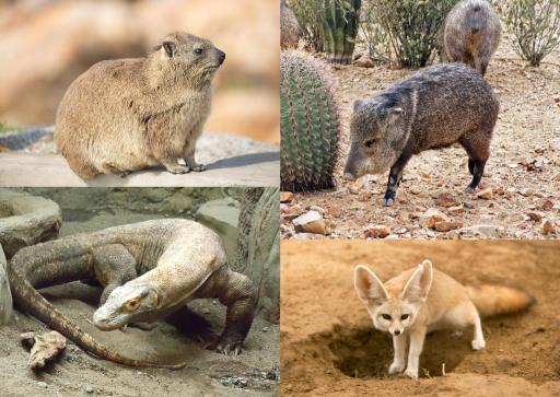 Imágenes de animales por el desierto