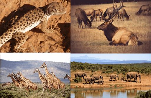 Imágenes de animales que viven en el desierto