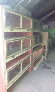 Jaula de cultivo de codornices de bajo costo