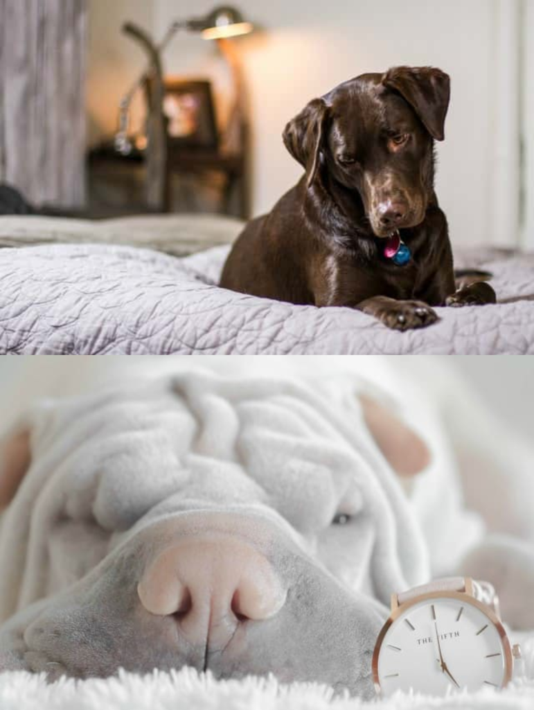 La mejor cama para perros