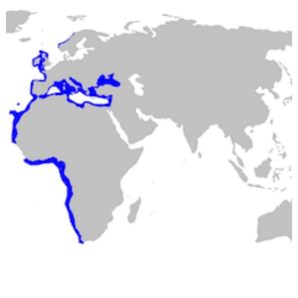 Mapa de Hábitat del Tiburón cerdo marino espinoso