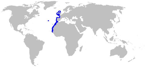 Mapa de Hábitat del Tiburón cerdo marino velero