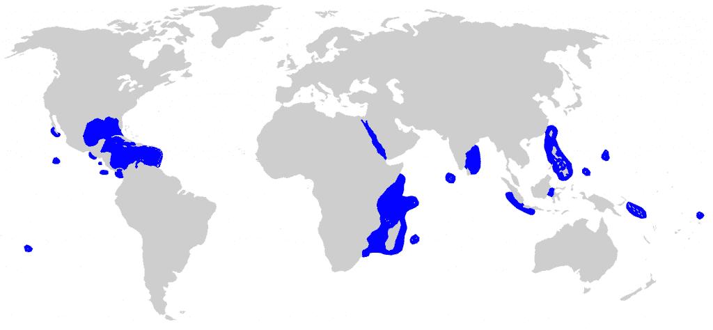 Mapa del hábitat de distribución tiburón de puntas plateadas