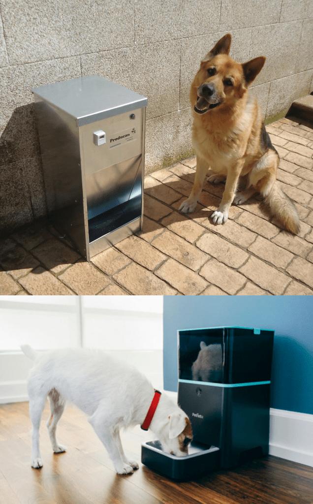 Mejores comederos automáticos para perros