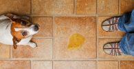 Perro vomita bilis
